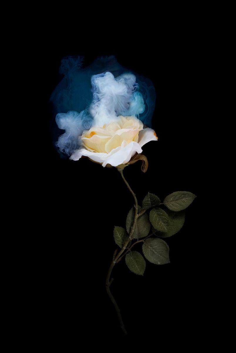 NIGHT BLOOM, YELLOW ROSE